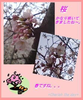 桜☆070329