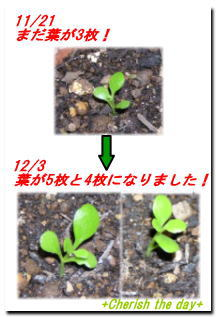 幸福の葉っぱ061203