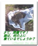猫の昼寝。しかし。。。☆