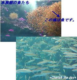 お魚たち①☆