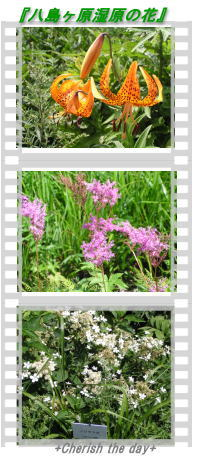 八島が原湿原の花☆