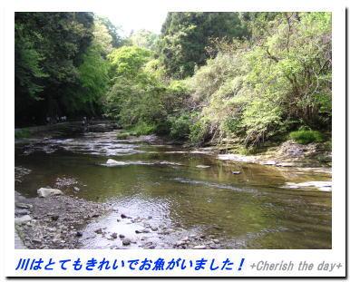 養老渓谷の川☆