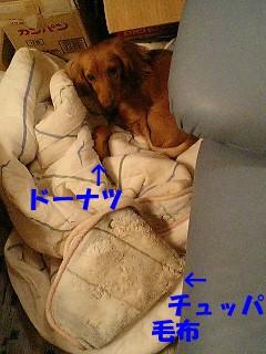 20060124034035.jpg