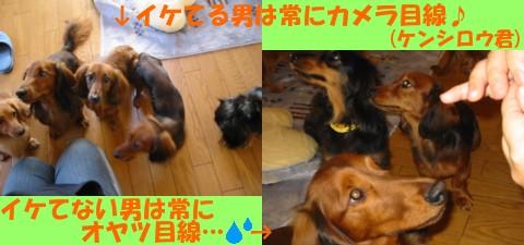 gin_ken.jpg