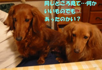hana_saku.jpg