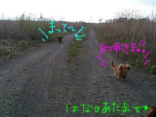 harappa_2.jpg