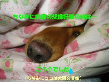 sakura_souzou_3.jpg