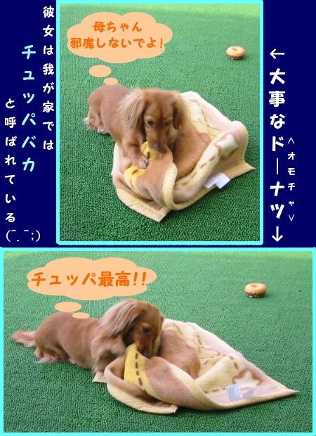 sakura_tyupa.jpg