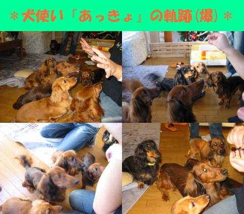 wan_syugou.jpg