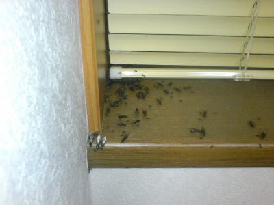 黒蟻さんたち