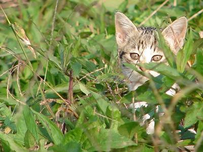 子猫(のら)