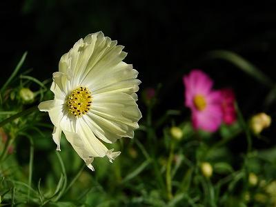 キャンパスミックス「開花」
