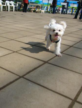 2007-03-10dogrun2.jpg