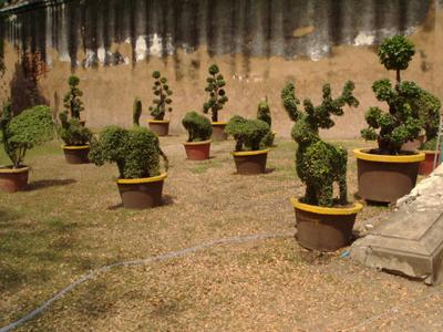 盆栽の動物園