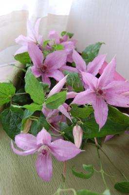 クレマチスの花束