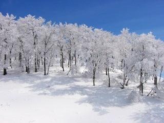 イリュージョンサイトの樹氷