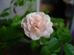 2005_05250012-s.jpg