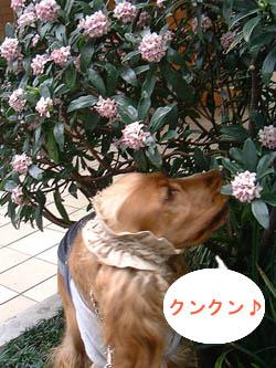 いい匂い☆彡