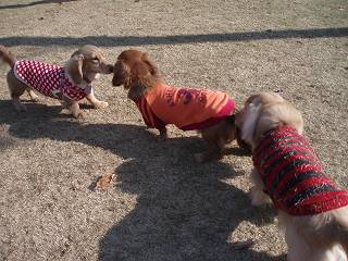 Dog Garden ZEBRA