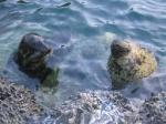 seaworld8.jpg