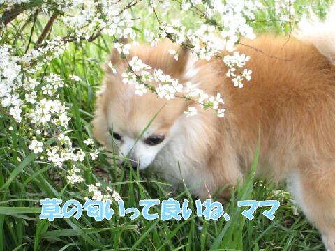 IMG_0026_1.jpg