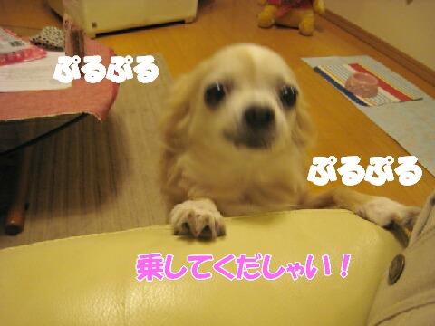 IMG_0094.jpg