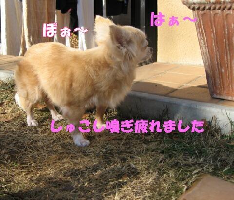 IMG_0439.jpg