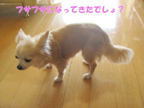 IMG_0460.jpg