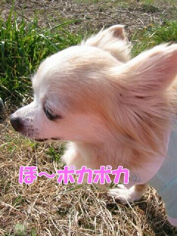IMG_5637b.jpg