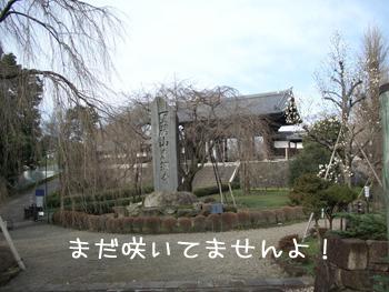 東郷寺です