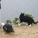 鳥(名前不詳)とソックスを履いた猫♪