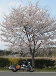 07_04_08ashikakga_fp06.jpg