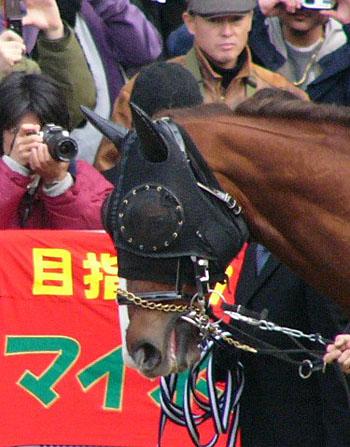 Daiwa-Major01.jpg