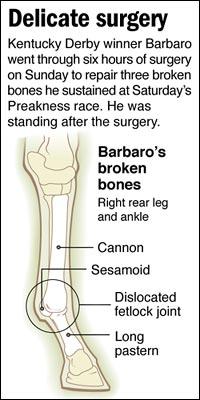 barbaro_diagram200.jpg
