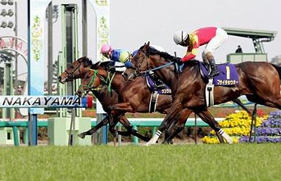 satsukisho2007-02-houchi400.jpg