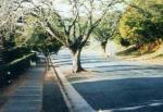 treeroads.jpg