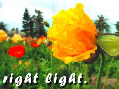 rightlight.jpg