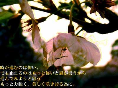 susumu.jpg