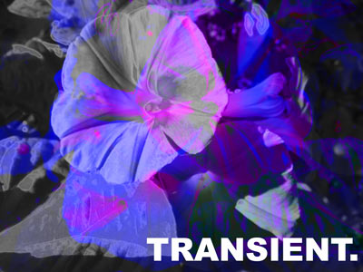 transient.jpg