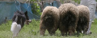 sheepback.jpg