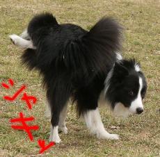 shikko1.jpg