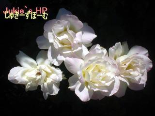 kiiroibara4hon.jpg