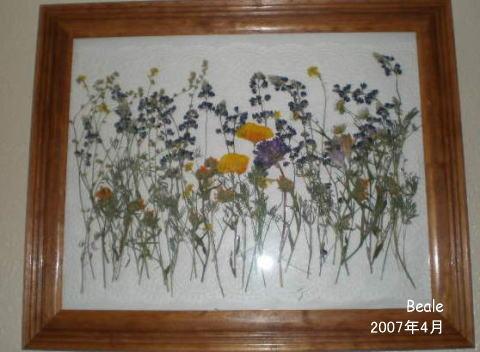 oshibanabeale20074.jpg
