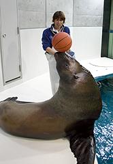 大分市の大分マリーンパレス水族館「うみたまご」で