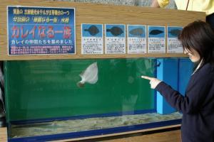 志摩市阿児町の水族館・志摩マリンランドで