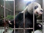 中国北部陝西省の動物保護センター