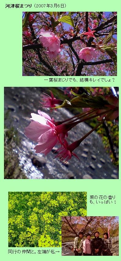 河津桜まつり2007