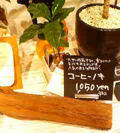 20060309181918