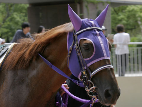 PurpleEagle5731_0305faL480