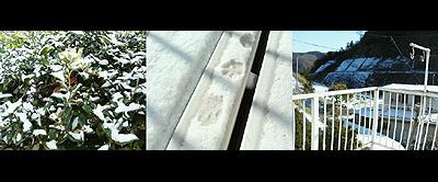 珍しい12月の雪
